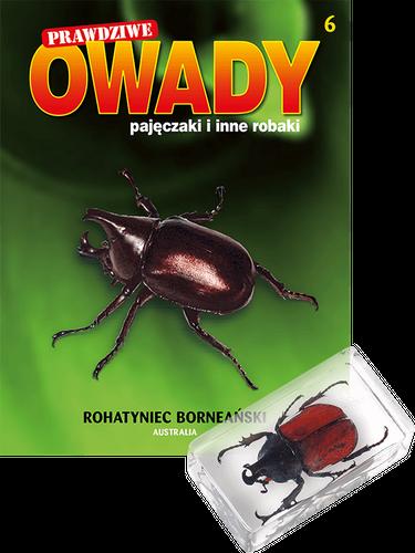"""Prenumerata """"Prawdziwe owady, pajęczaki i inne robaki"""" od tomu 6. Przesyłka cz. 6 i 7"""